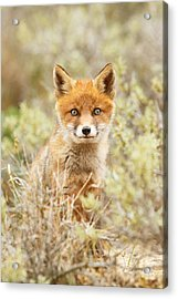 Funny Face Fox Acrylic Print by Roeselien Raimond