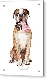Funny Thirsty Hot Dog Drooling Acrylic Print by Susan Schmitz