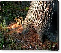 Furry Neighbor Acrylic Print by Paul Sachtleben