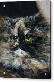 Furry Acrylic Print by Valeriy Mavlo