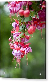 Fuschia Acrylic Print by Rockstar Artworks