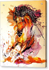 Galloping Horse Acrylic Print by Steven Ponsford