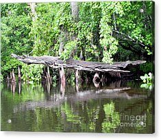 Gator Stump Acrylic Print by Jack Norton