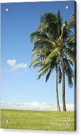 Generic Palm Tree Acrylic Print by Brandon Tabiolo - Printscapes