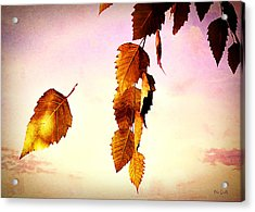 Gently September Acrylic Print by Bob Orsillo