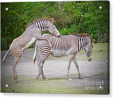 Get' E Up Mom Acrylic Print by Judy Kay