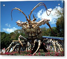 Giant Lobster Acrylic Print by Tammy Chesney