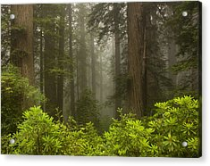 Giants In The Mist Acrylic Print by Mike  Dawson