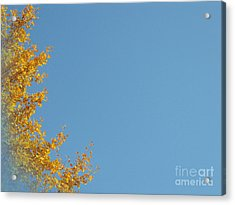Ginkgo Fantasy In Blue Acrylic Print by Eena Bo