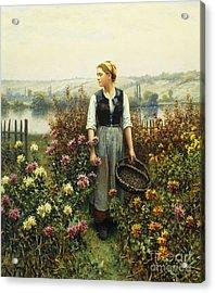 Girl With A Basket In A Garden Acrylic Print by Daniel Ridgway Knight