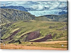Glacier Mountains Meadows Horses Acrylic Print by David Halperin