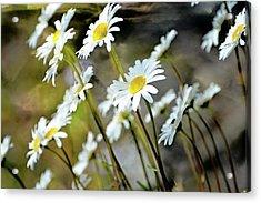Glacier Wildflowers Acrylic Print by Marty Koch