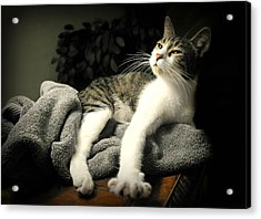 Higgins Acrylic Print by Diana Angstadt