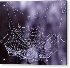 Glistening Web Acrylic Print by Karol Livote