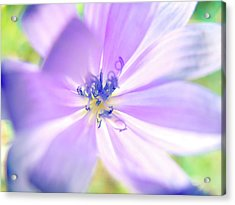 Glowing Flower, Pink  Acrylic Print by Nat Air Craft