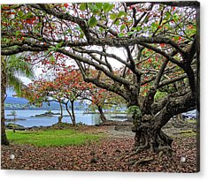 Gnarly Trees Of South Hilo Bay - Hawaii Acrylic Print by Daniel Hagerman