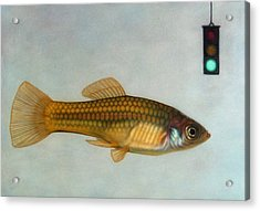 Go Fish Acrylic Print by James W Johnson