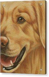Goggie Golden Acrylic Print by Karen Coombes