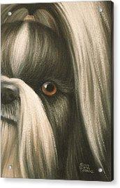 Goggie Shih Tzu Acrylic Print by Karen Coombes