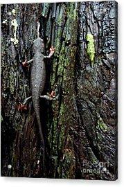 Going Up Acrylic Print by JoAnn SkyWatcher