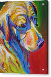 Golden - Max Acrylic Print by Alicia VanNoy Call