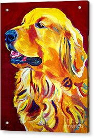 Golden - Scout Acrylic Print by Alicia VanNoy Call