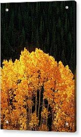 Golden Autumn Acrylic Print by Andrew Soundarajan