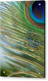 Golden Feather Acrylic Print by Lisa Knechtel