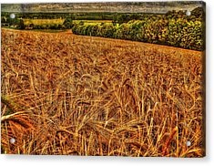 Golden Field In Normandy Acrylic Print by Karo Evans