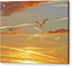 Golden Flight Acrylic Print by Adele Moscaritolo
