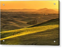 Golden Grains Acrylic Print by Mark Kiver