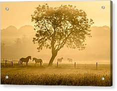 Golden Horses Acrylic Print by Richard Guijt