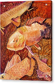 Golden Koi Acrylic Print by Pat Saunders-White