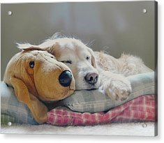 Golden Retriever Dog Sleeping With My Friend Acrylic Print by Jennie Marie Schell
