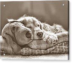 Golden Retriever Dog Sleeping With My Friend Sepia Acrylic Print by Jennie Marie Schell