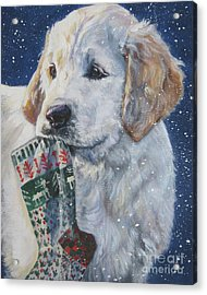 Golden Retriever With Xmas Stocking Acrylic Print by Lee Ann Shepard