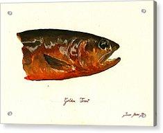 Golden Trout  Acrylic Print by Juan  Bosco