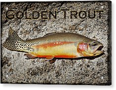 Golden Trout Acrylic Print by Kelley King