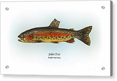 Golden Trout Acrylic Print by Ralph Martens