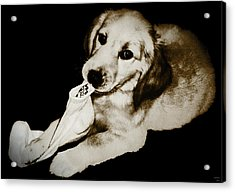 Golden's Best Friend Acrylic Print by Rora