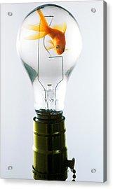 Goldfish In Light Bulb  Acrylic Print by Garry Gay