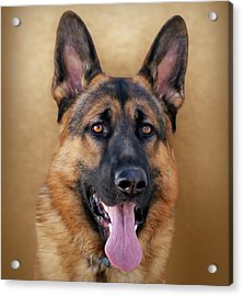 Good Boy Acrylic Print by Sandy Keeton