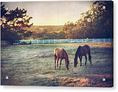 Good Company Acrylic Print by Laurie Search