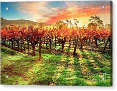 Good Morning Napa Acrylic Print by Jon Neidert