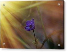 Good Morning Sunshine On Blue Acrylic Print by Angela A Stanton