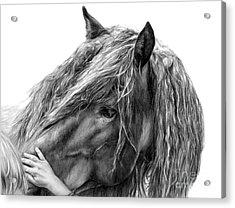 Goodwill And Harmony Acrylic Print by Sheona Hamilton-Grant