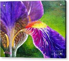 Gorgeous Iris  Acrylic Print by Viktoriya Sirris