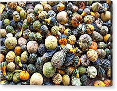 Gourds Pumpkins - Wisconsin  Acrylic Print by Steven Ralser