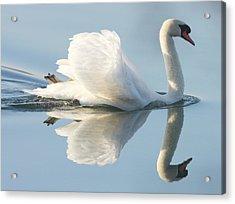 Graceful Swan Acrylic Print by Andrew Steele