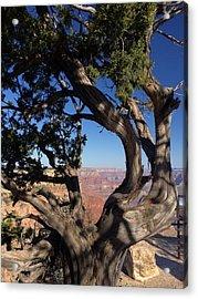Grand Canyon No. 6 Acrylic Print by Sandy Taylor